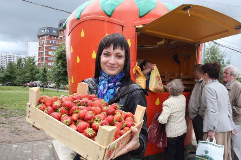 Купить саженцы клубники в москве совхоз ленина